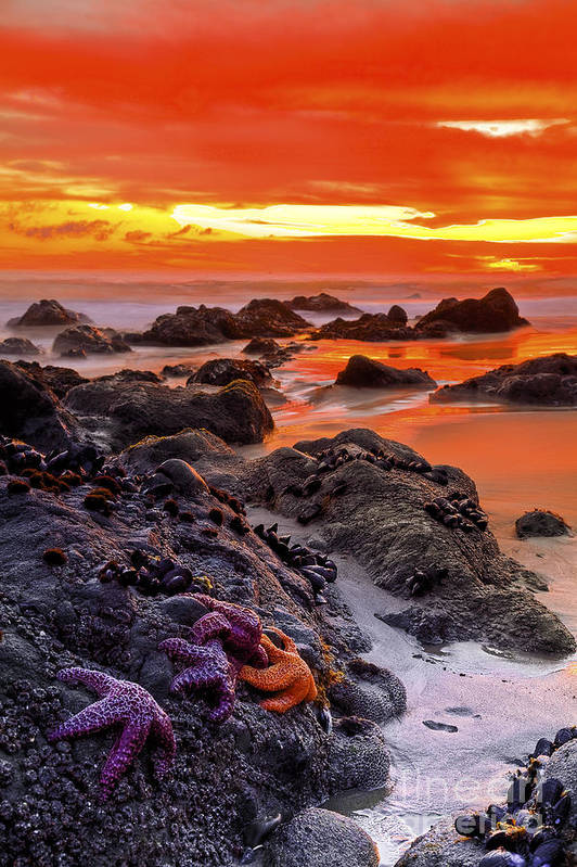 Beaches Art Print featuring the photograph Star Gathering by Greg Clure