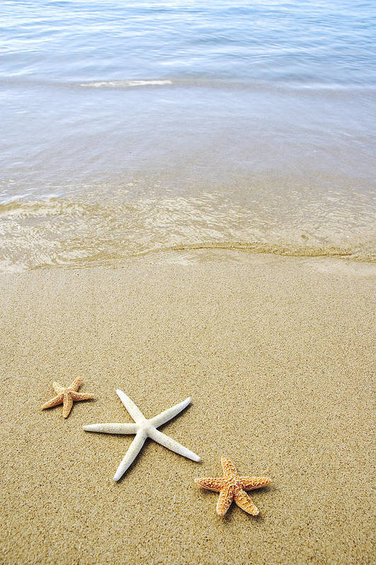 Afternoon Art Print featuring the photograph Starfish On Beach by Mary Van de Ven - Printscapes