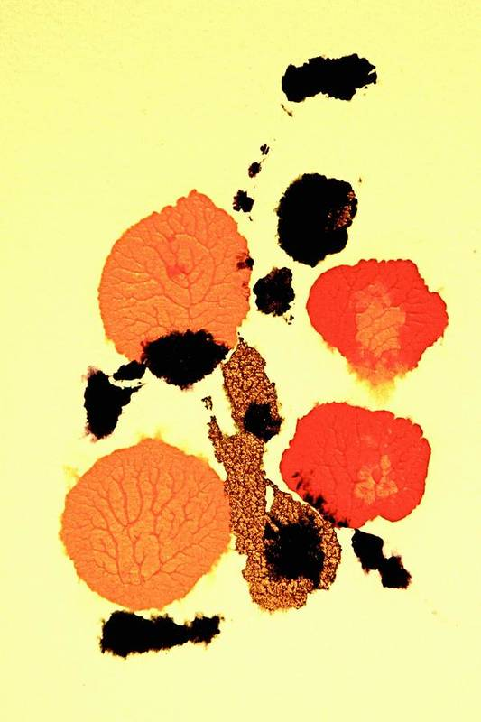 Oranges Art Print featuring the painting Still Life by Dan Earle