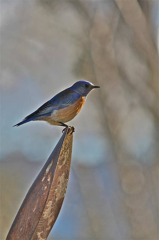 Bird Art Print featuring the photograph Stopping On A Shovel by Diana Hatcher