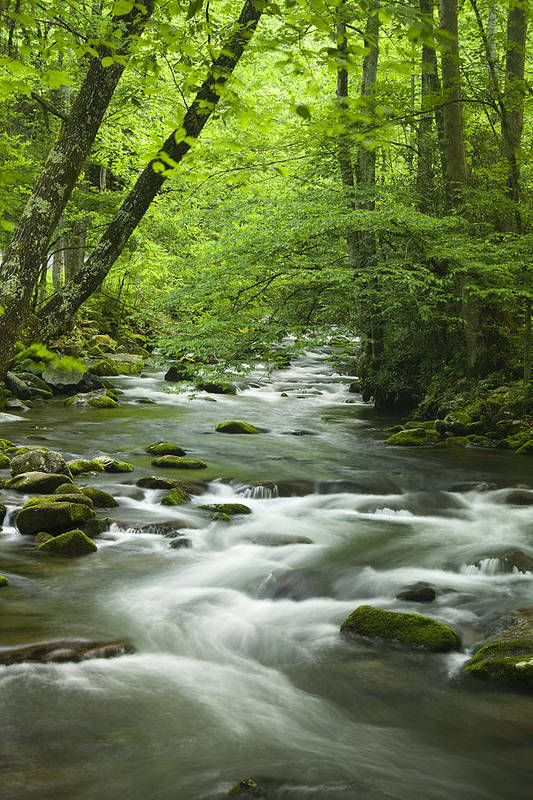 River Art Print featuring the photograph Stream In The Smokies by Andrew Soundarajan
