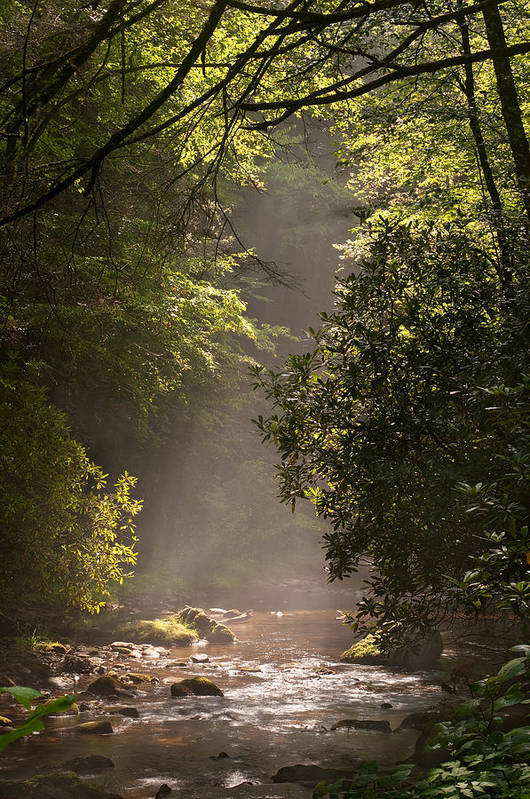 Blueridge Art Print featuring the photograph Stream Light by Steve Gadomski