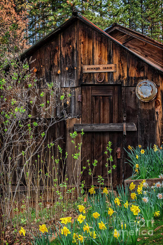 Summer Art Print featuring the photograph Summer Cabin by Dianne Phelps