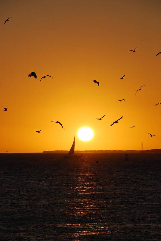 Sunset Print featuring the photograph Sunset Birds Key West by Susanne Van Hulst