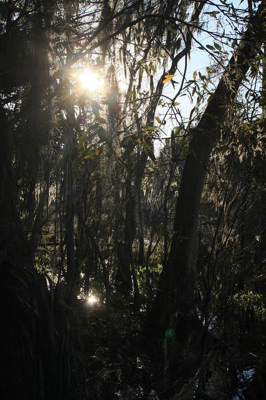 Woods Art Print featuring the photograph Sunwood by Elsie Figuora