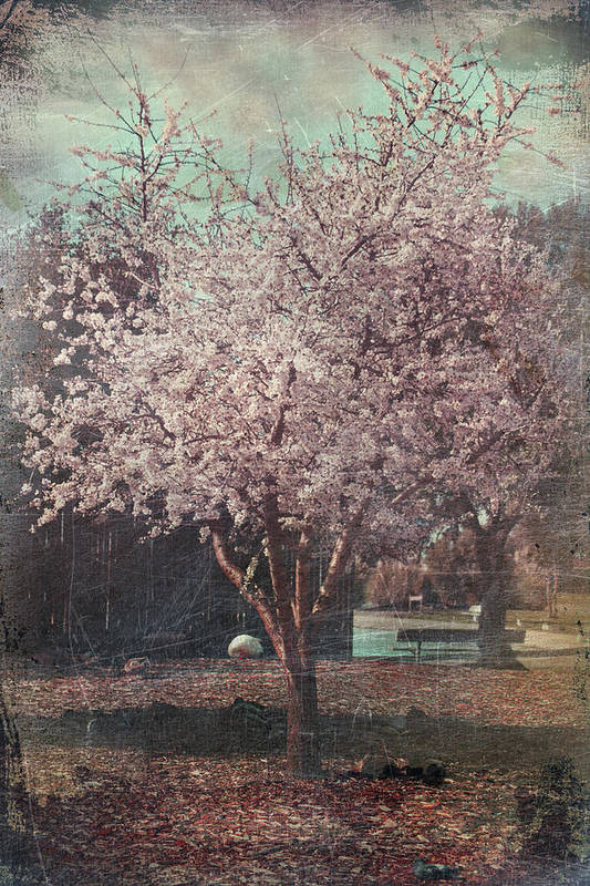Cherry Blossom Tree Art Print featuring the photograph Sweet Kisses Under The Tree by Laurie Search