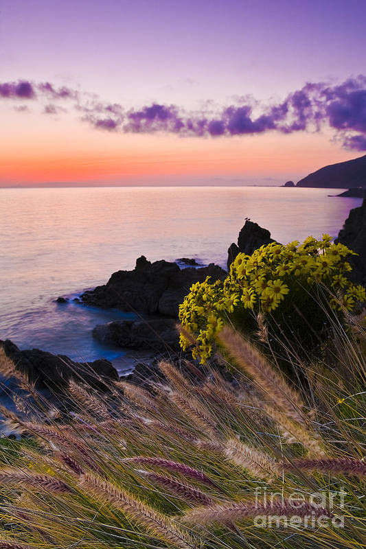 Beaches Art Print featuring the photograph Sycamore Cove After Sunset by Greg Clure