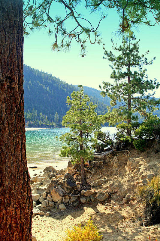 Pines Art Print featuring the photograph Tahoe Pines by Lynn Bawden