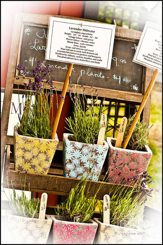 Lavender Art Print featuring the photograph Take Out by Joy Gerow