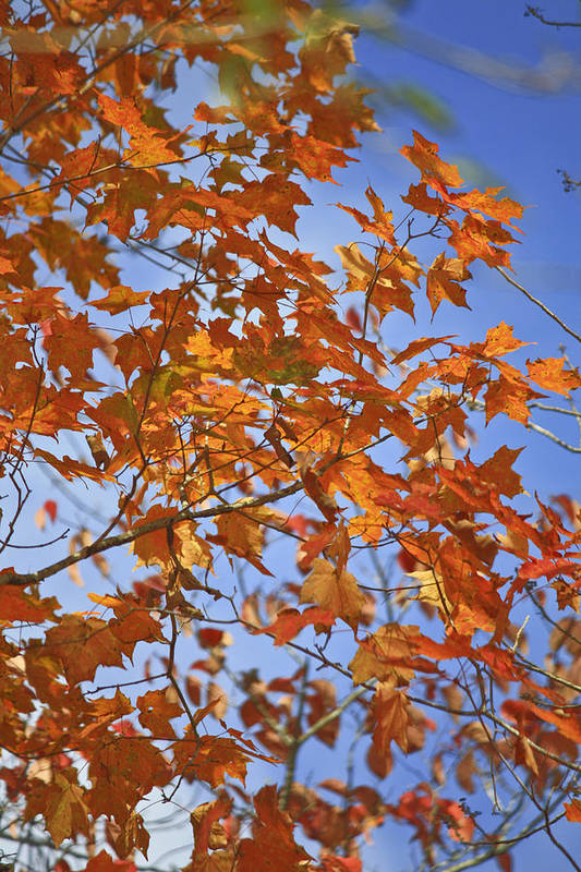 Fall Art Print featuring the photograph The Color Of Fall 2 by Teresa Mucha