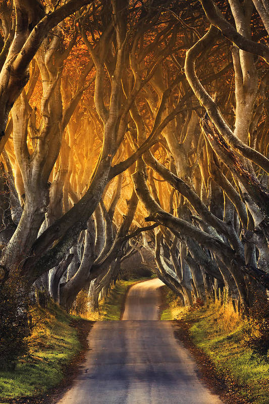 Take A View Art Print featuring the photograph The Dark Hedges IIi by Pawel Klarecki