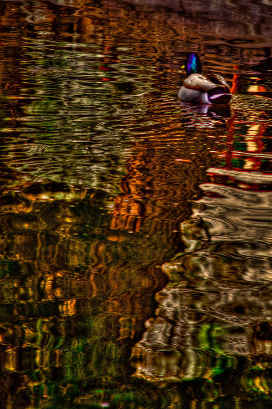 Duck Art Print featuring the photograph The Duck Pond by David Patterson