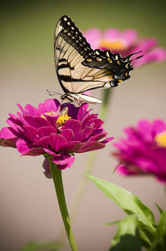 Butterfly Art Print featuring the photograph The Flower And Butterfly by Chad Davis