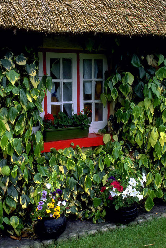 Ivy Art Print featuring the photograph The Perfect Cottage by Carl Purcell