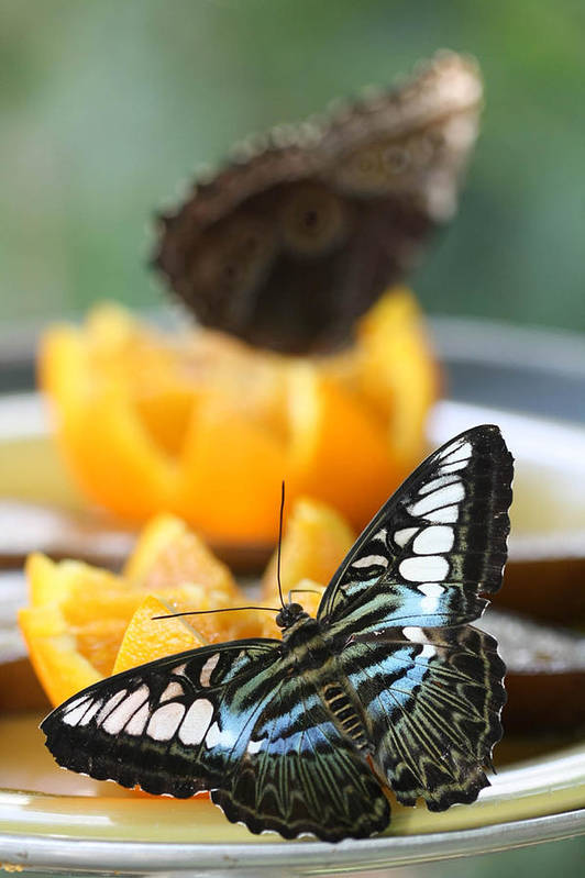 Butterflies Art Print featuring the photograph The View From Here by Laurel Ransom