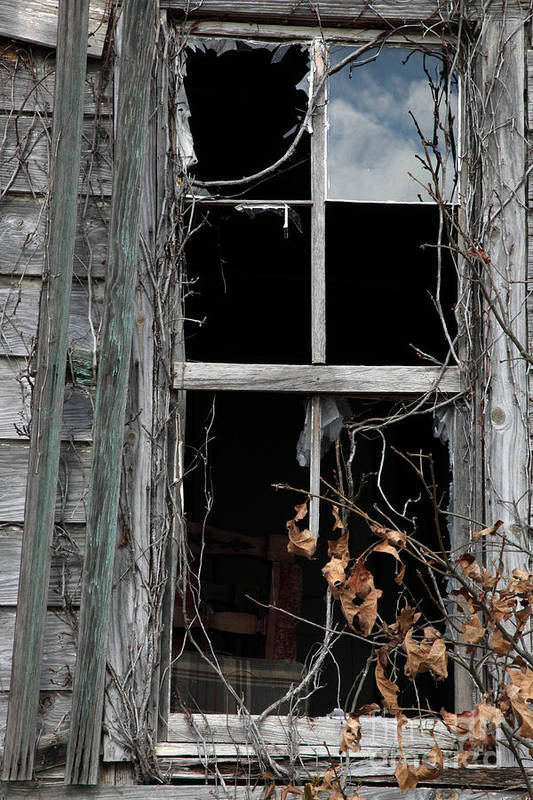 Windows Art Print featuring the photograph The Window by Amanda Barcon