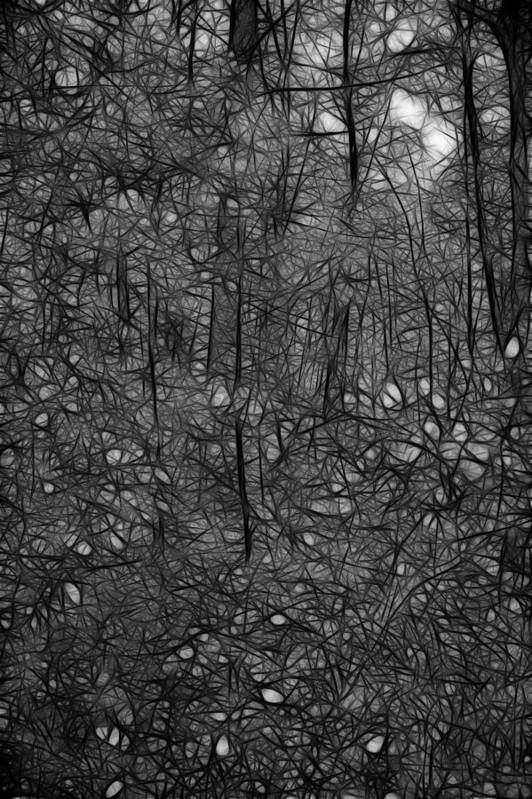 Thoreau Art Print featuring the photograph Thoreau Woods Black And White by Lawrence Christopher