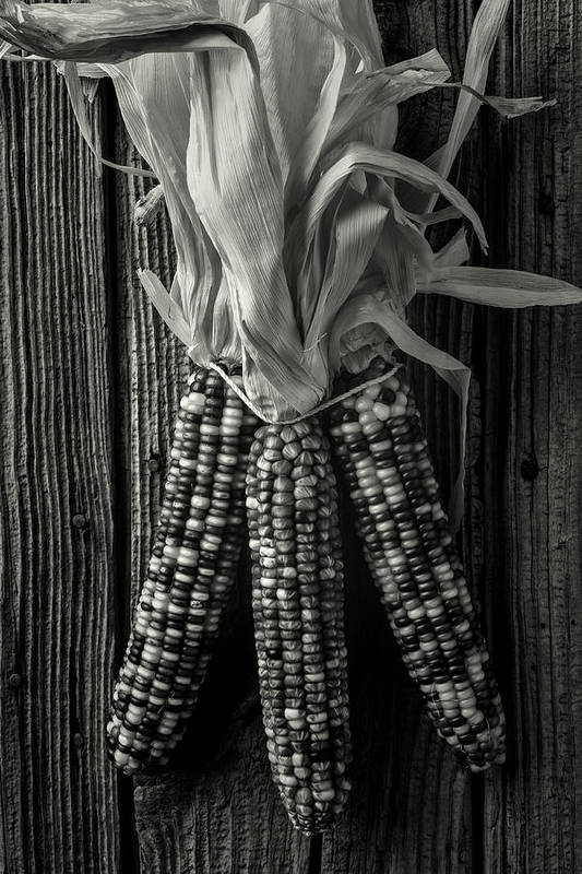 Indian Art Print featuring the photograph Three Indian Corn In Black And White by Garry Gay