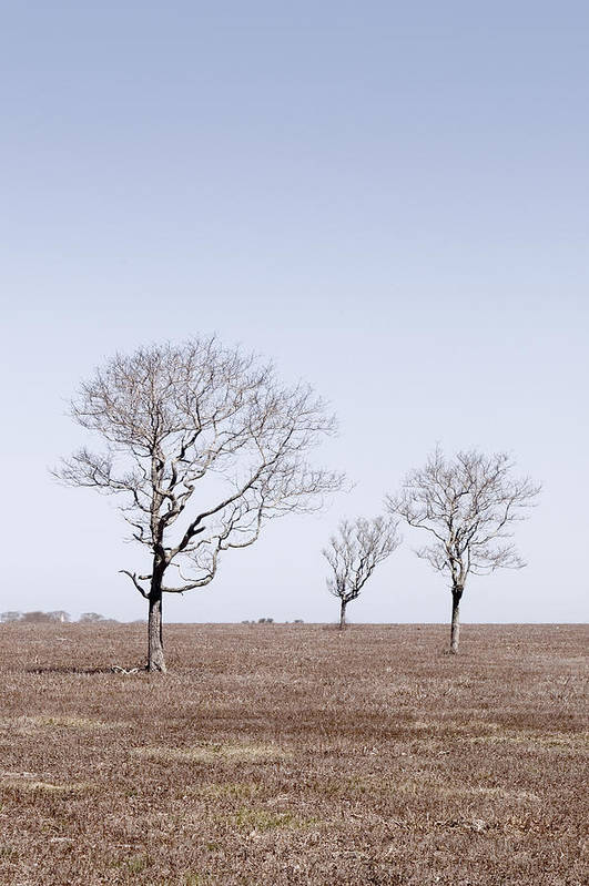 Trees Art Print featuring the photograph Three Trees - Nantucket by Henry Krauzyk