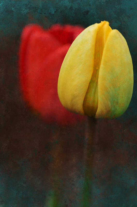 Tulips Art Print featuring the photograph Too Tulips by Peter Olsen