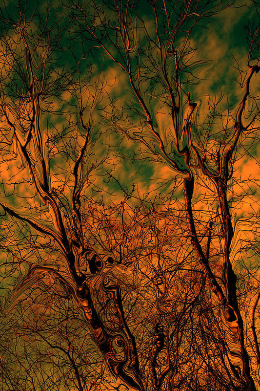 Trees Art Print featuring the photograph Tree Abstract by Linda Sannuti