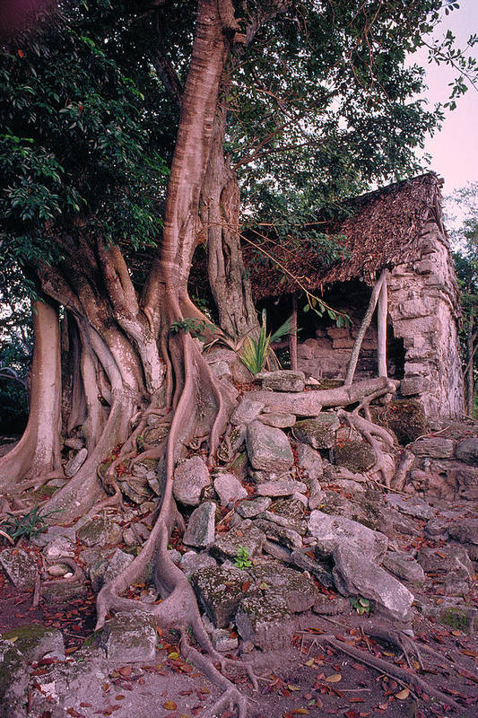 Tree Art Print featuring the photograph Tree And Ruins In Cozumel by Thomas Firak