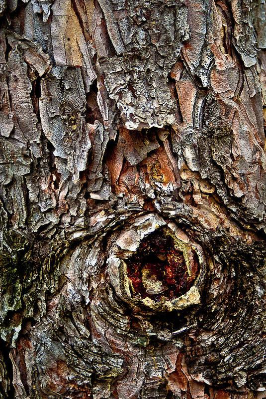 Tree Bark Art Print featuring the photograph Tree Bark With Knothole by Onyonet Photo Studios