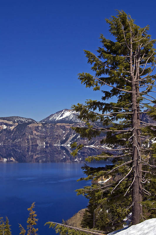 Tree Art Print featuring the photograph Tree Over Crater Lake by Kristen Vota