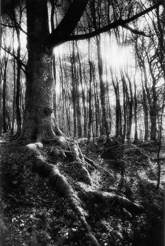 Vale; Legendary; Wood; Woods; Woodland; Landscape; Rural; Countryside; Magical; Mysterious; Fairytale; Bare Trees; Atmospheric; Dramatic; Eerie; Spooky; French; Moonlight; Moonlit Art Print featuring the photograph Trees At The Entrance To The Valley Of No Return by Simon Marsden