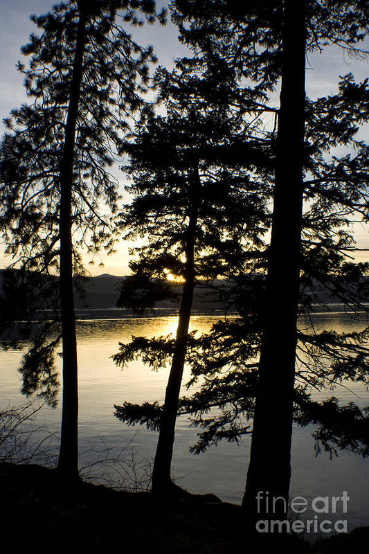Trees Art Print featuring the photograph Trees By The Lake by Idaho Scenic Images Linda Lantzy