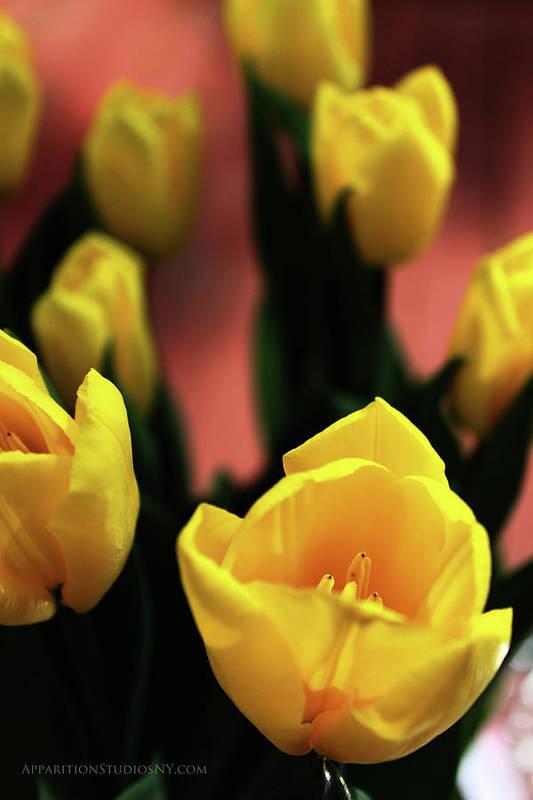 Tulips Art Print featuring the photograph Tulips by Matt Truiano