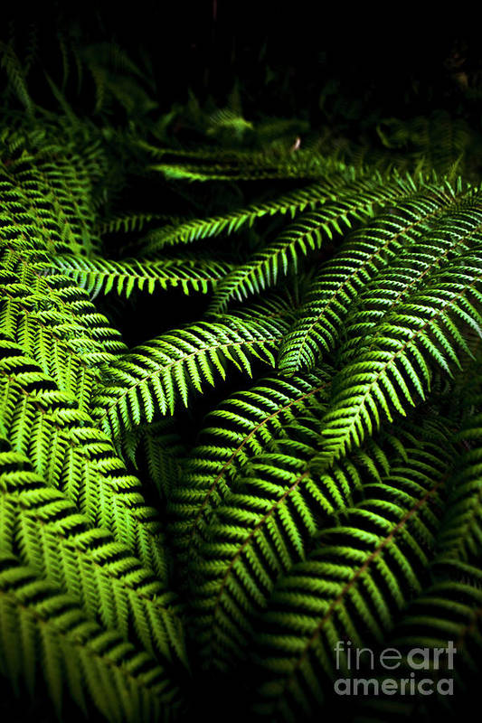 Twilight Rainforest Fern Art Print by Jorgo Photography - Wall Art ...