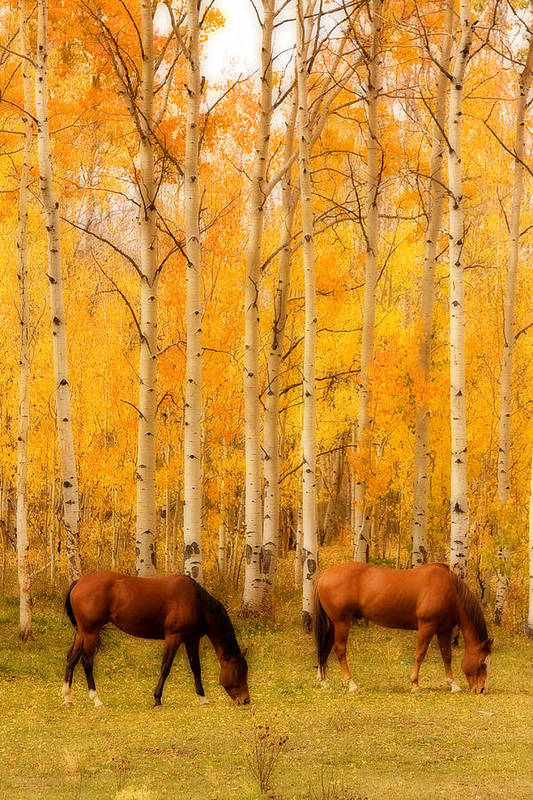 Autumn Art Print featuring the photograph Two Horses In The Autumn Colors by James BO Insogna