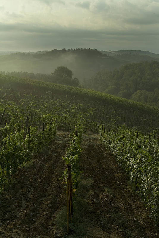 Vineyards Art Print featuring the photograph Vineyards Along The Chianti Hillside by Todd Gipstein