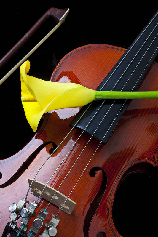 Violin Art Print featuring the photograph Violin With Yellow Calla Lily by Garry Gay