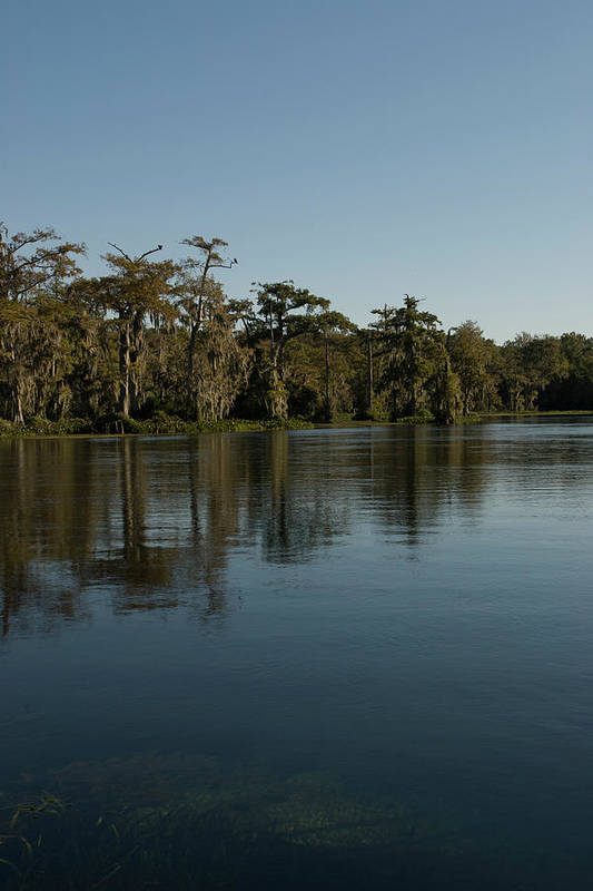 Color Photograph Art Print featuring the photograph Wakulla Springs River by Wayne Denmark