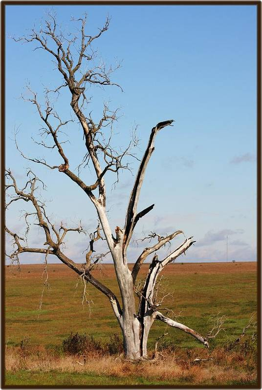 Tree Art Print featuring the photograph Weathered by Jim Darnall