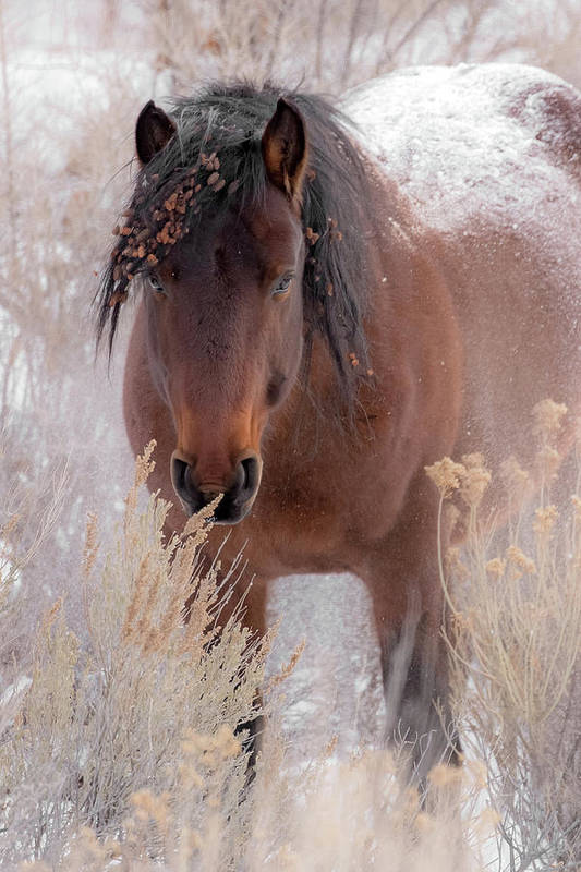 Animal Art Print featuring the photograph Weathering The Cold by Sandy Sisti
