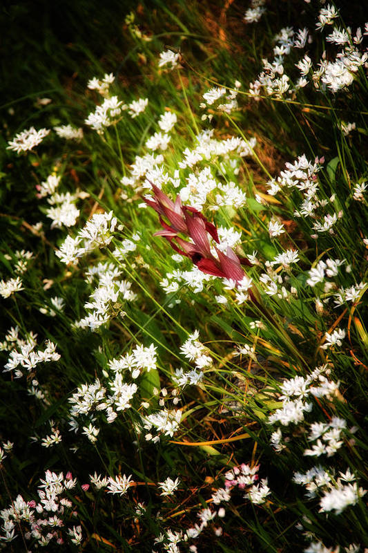 Agriculture Art Print featuring the photograph Wild Flowers by Stelios Kleanthous