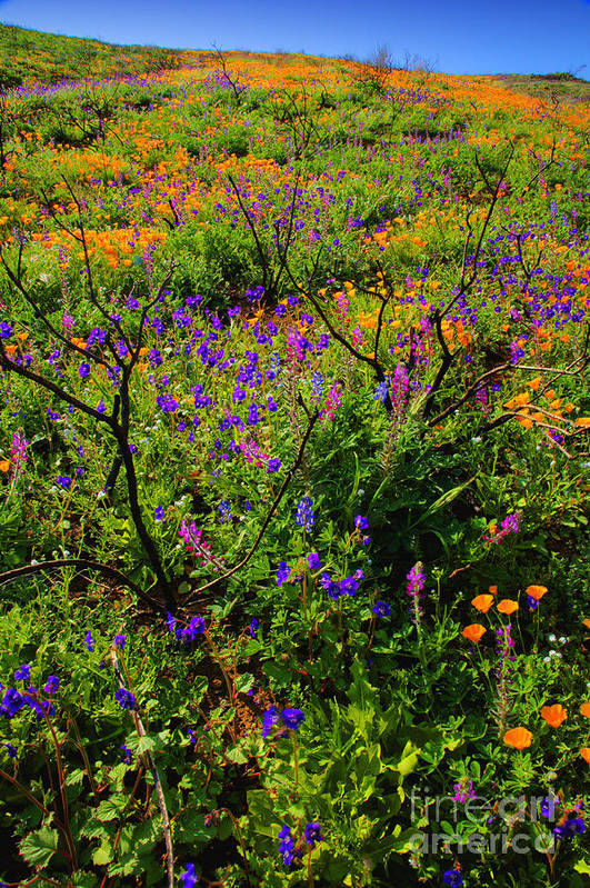 California Art Print featuring the photograph Wildflowerscape by Greg Clure