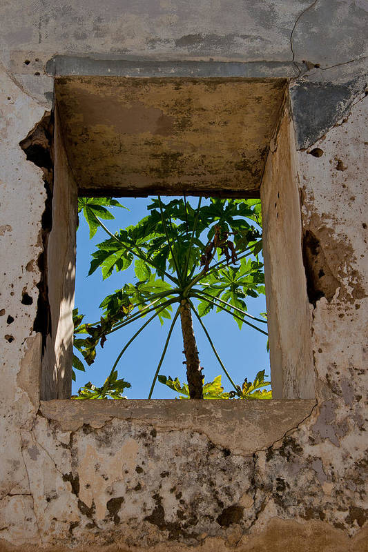 Building Art Print featuring the photograph Window Tree by Roger Mullenhour