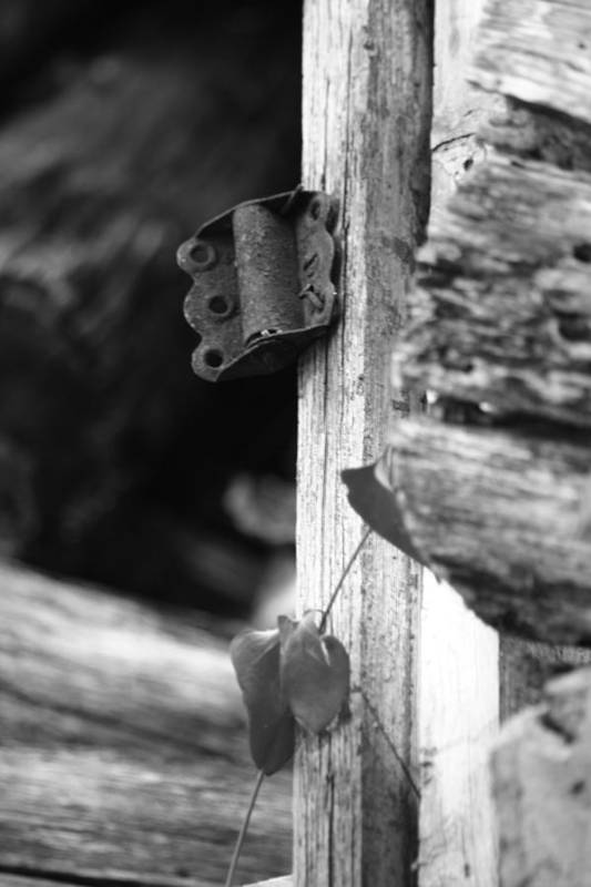 Ansel Adams Art Print featuring the photograph Winslow Cabin Door Detail by Curtis J Neeley Jr