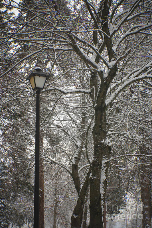 Lamp Art Print featuring the photograph Winter Lamp Post by Idaho Scenic Images Linda Lantzy