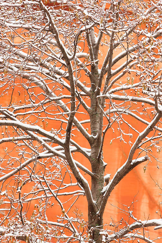 Snow Art Print featuring the photograph Winter's Touch by Carl Amoth