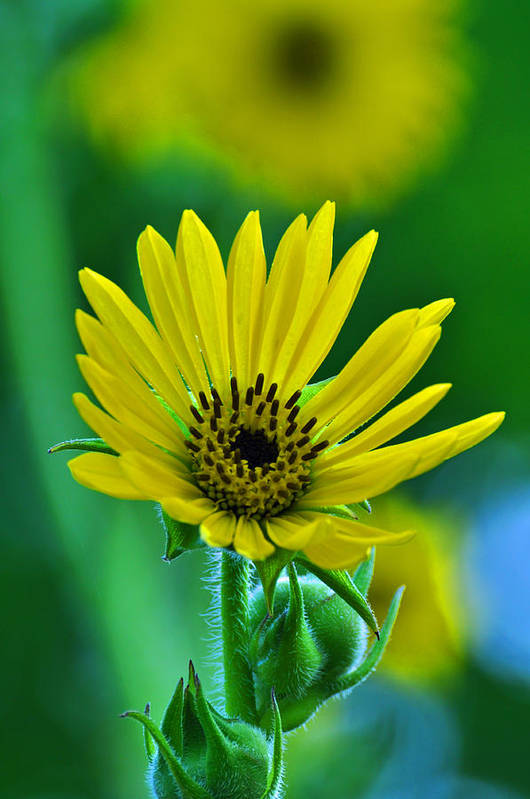Flower Art Print featuring the photograph Yellow And Green 2 by Peter McIntosh