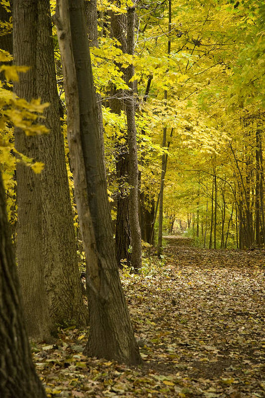 Landscape Art Print featuring the photograph Yellow Path by Ryan Krueger