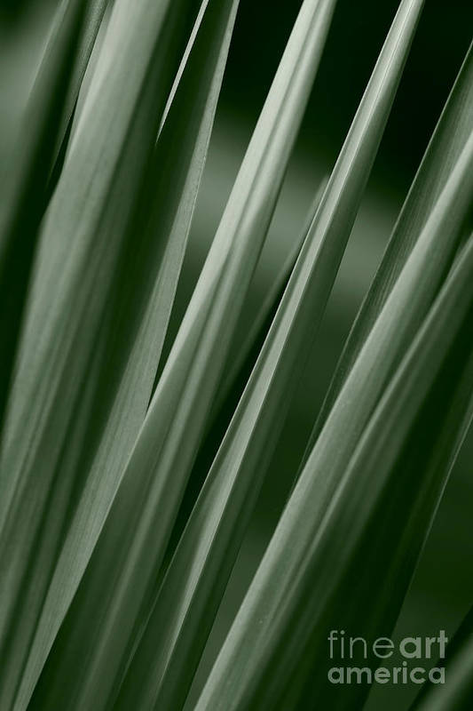 Abstract Art Print featuring the photograph Yucca Spikes by Jeannie Burleson