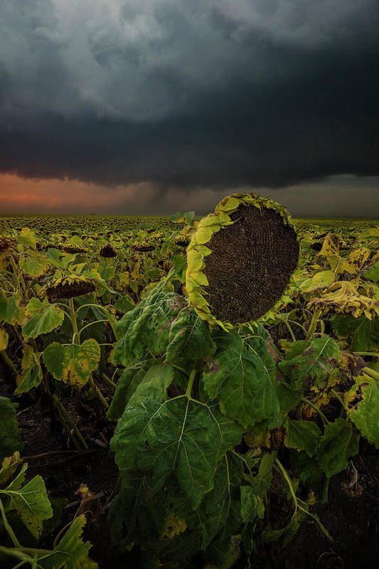 Tornado Art Print featuring the photograph Twisted by Aaron J Groen