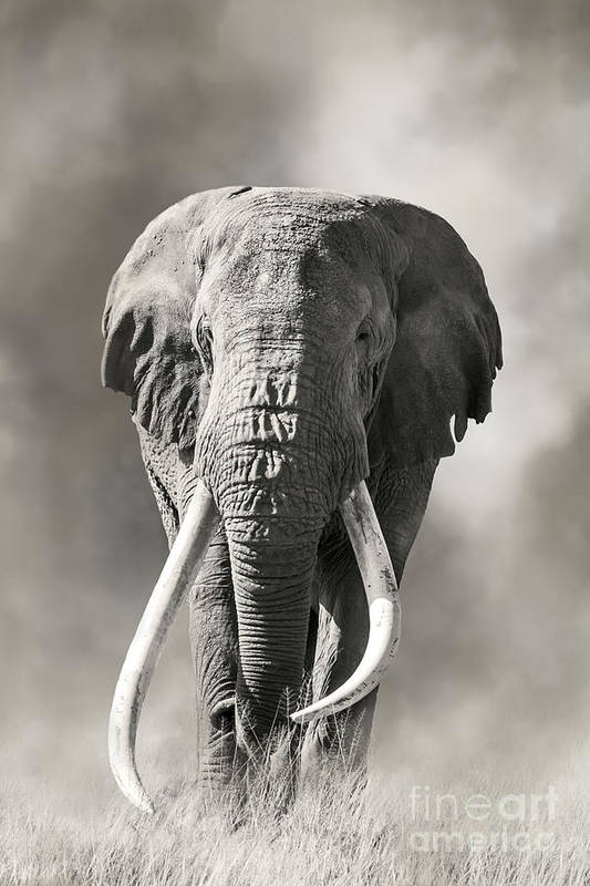 Male Art Print featuring the photograph Giant Tusked Bull Elephant In Amboseli, Kenya by Jane Rix