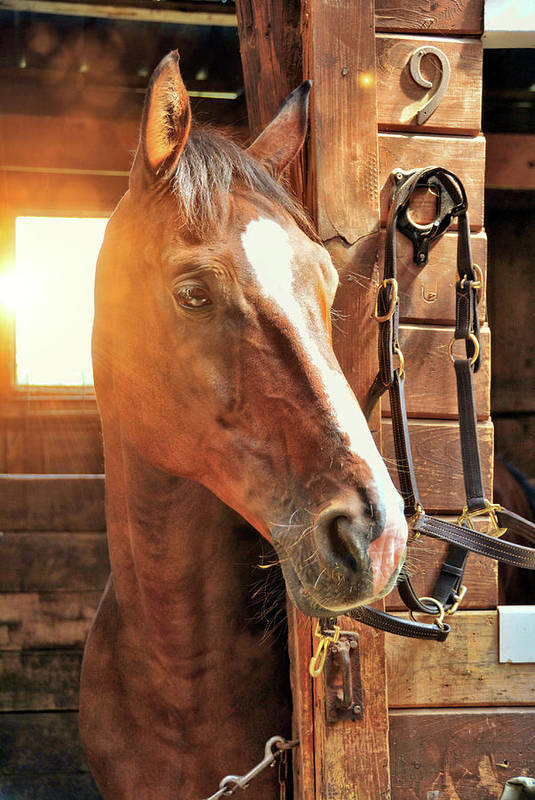 Horse Art Print featuring the photograph Handsome Cash by Jamart Photography